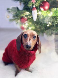 לחמם כלב בחורף